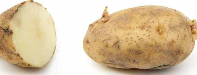 3×03: Massive Quantities of Potatoes